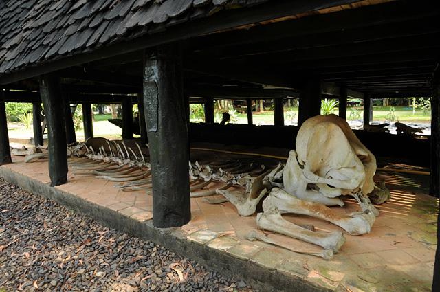 「黒い家」の床下に横たわる象の骨